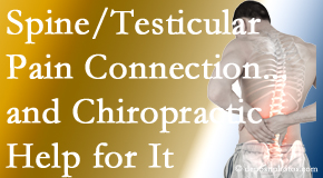 Hollstrom & Associates Inc shares recent research on the connection of testicular pain to the spine and how chiropractic care helps its relief.